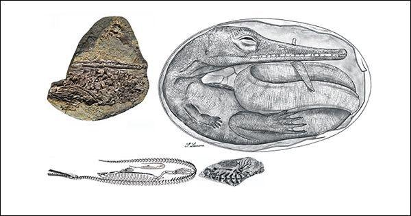 Живородіння могло виникнути ще до динозаврів