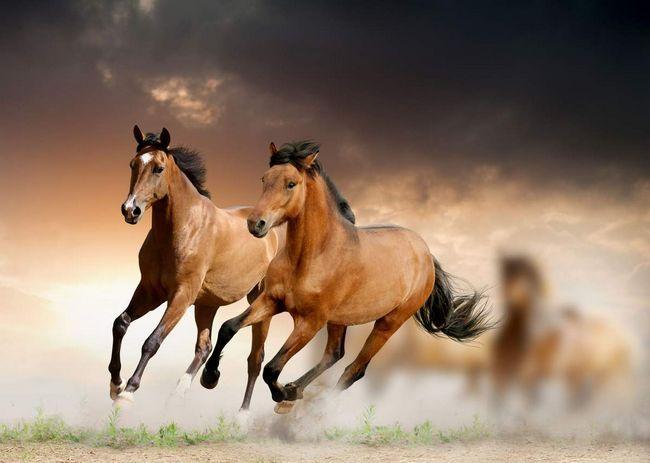 10 фактів про коней.