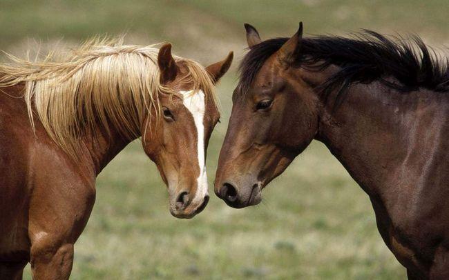 Коні можуть бачити кольорові сни.