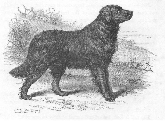 10 прикладів порід собак, яких більше немає