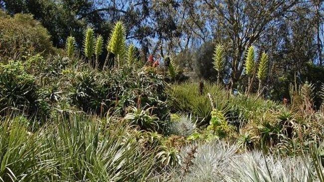 Самі редкоцветущіе рослини