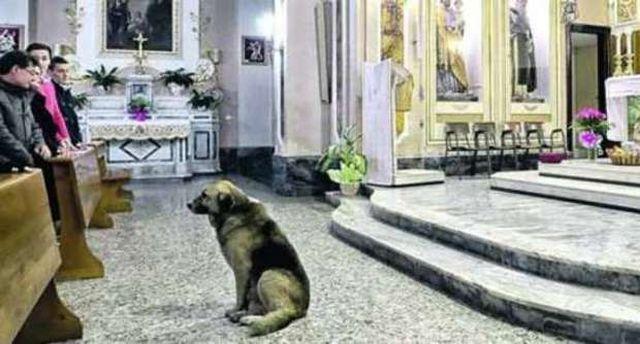 Вівчарка Томмі кожен день приходить до церкви на службу (фото: ilmessaggero.it)