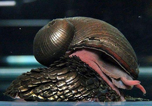12 найцікавіших равликів в світі
