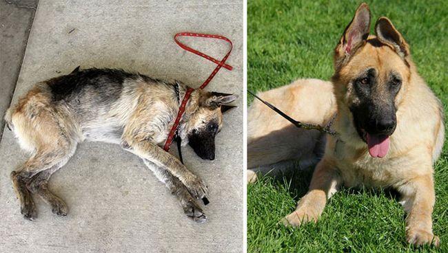 16 бездомних собак до і після порятунку
