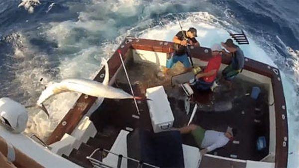 У сутичці з Марліном постраждав один рибалка (фото: news.com.au)