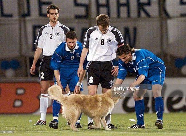 Тварини на спортивному полі