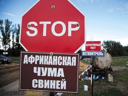 Африканська чума свиней - опис захворювання