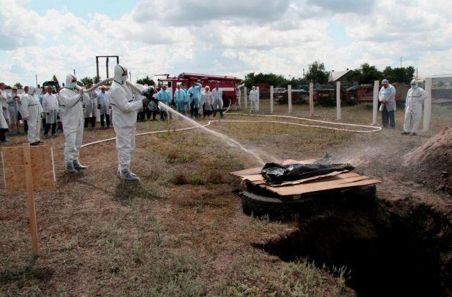Африканська чума свиней: заходи боротьби