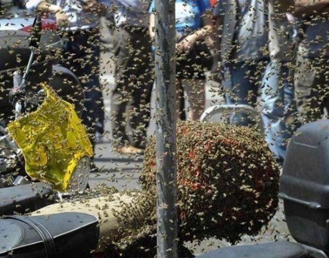 Африканські бджоли влаштували вулик з мотоцикла.