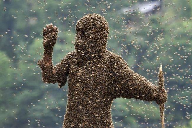 Африканські бджоли стали персонажами фільмів.