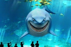 Акула акваріумна: питання вибору