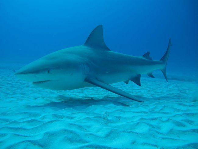 Акула завжди повинна бути в русі, інакше вона - потоне.