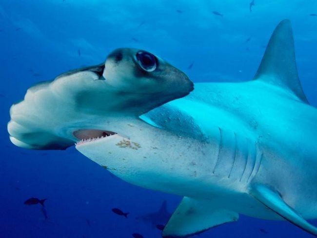 Зникнення акул загрожує людству глобальною екологічною катастрофою.