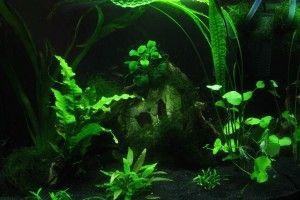 Аквафермах: відгуки про замкнутої екосистемі
