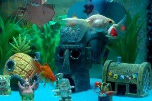 Акваріум для рибок: ціни та поради щодо вибору