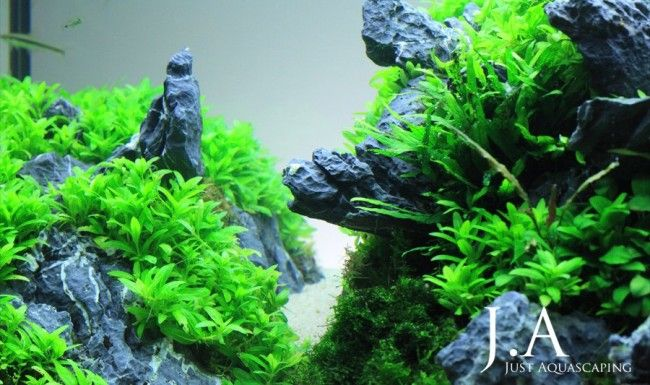 Акваскейп «на скелях»
