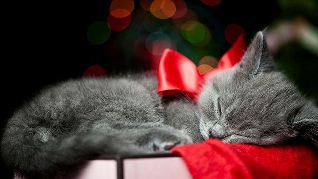 Алергія на кішок: революційний погляд