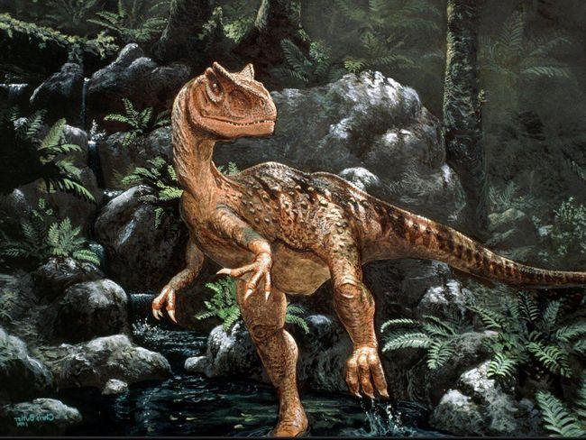 У аллозавра яскраво виражені надбрівні гребені.