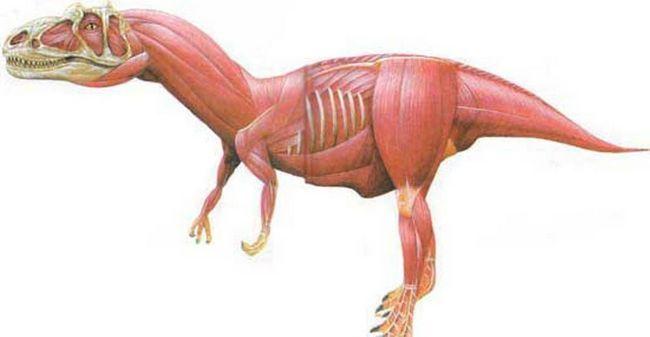 Ноги аллозавра утримували тіло масою 5-6 тонн.