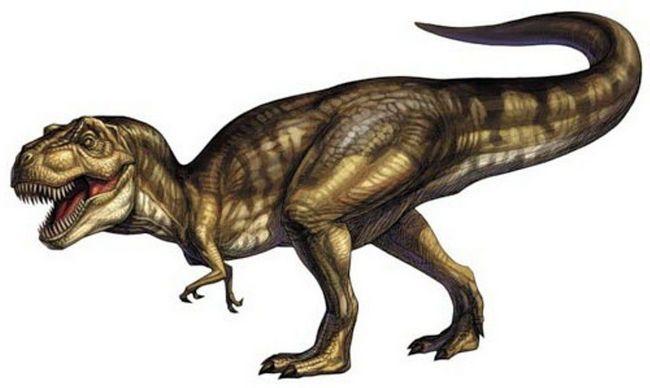Великий хвіст аллозавра врівноважував тіло аллозавра.
