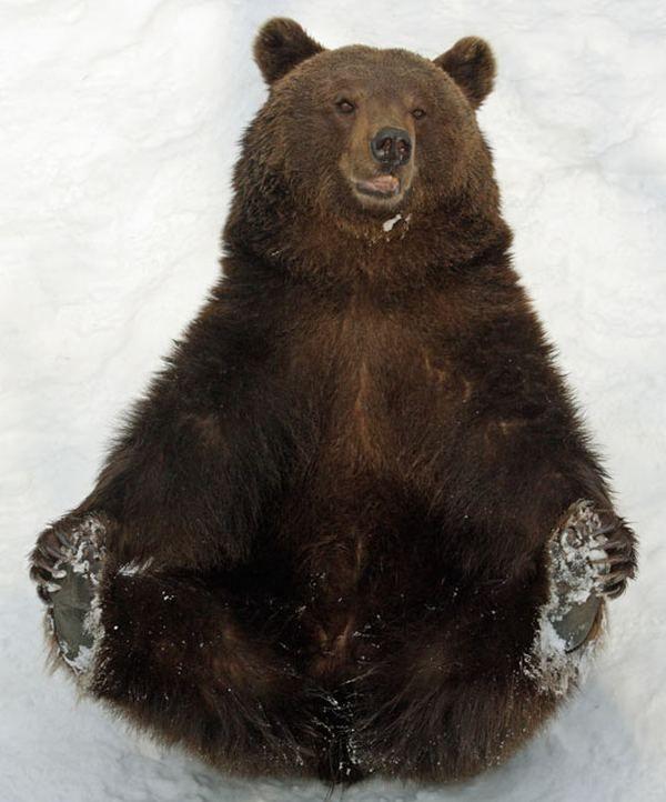 У студентському містечку рятувальники зняли ведмедя з дерева