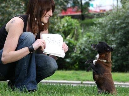 Віллоу (так звуть собаку) падає замертво, коли читає команду
