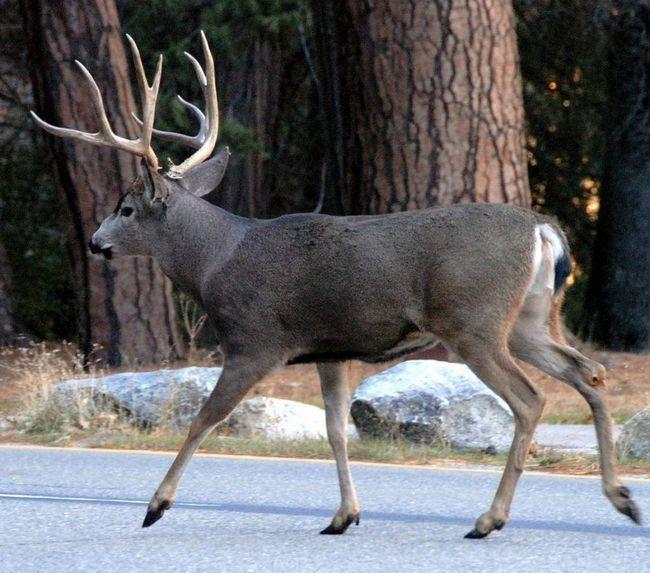 Мешкають головним чином в лісах, на рівнинах і в горах.