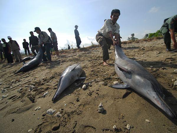 Сліди від укусів світиться акули на тілі тюленя