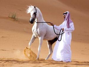 Арабська порода коней