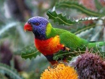 Австралійські ветеринари зайнялися порятунком папуг від