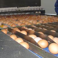 Автоматизовані лінії обробки яєць