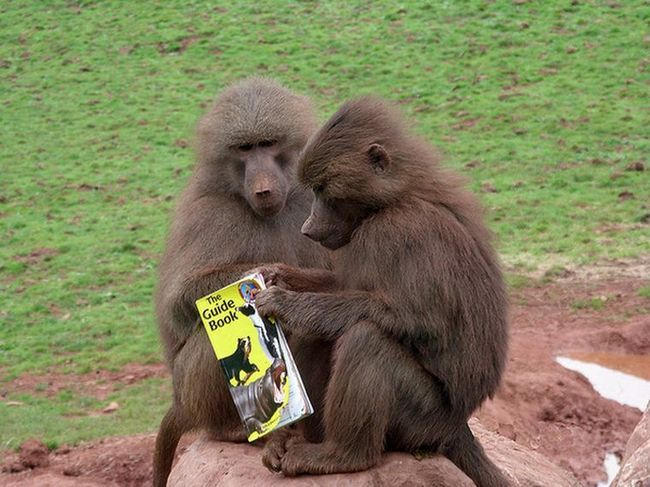 Нова мама піклується про свого підопічного, однак постійно краде його їжу (фото: sky.com)