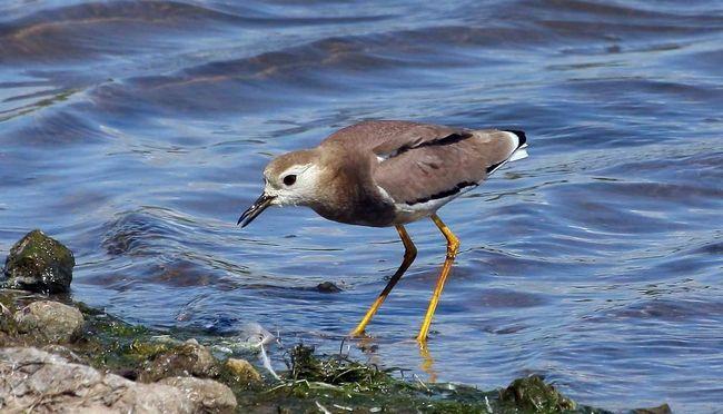 Поступово людьми знищуються природні місця проживання ці птахів.