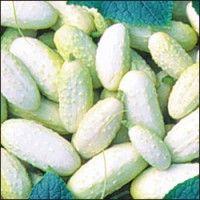 Білі огірки