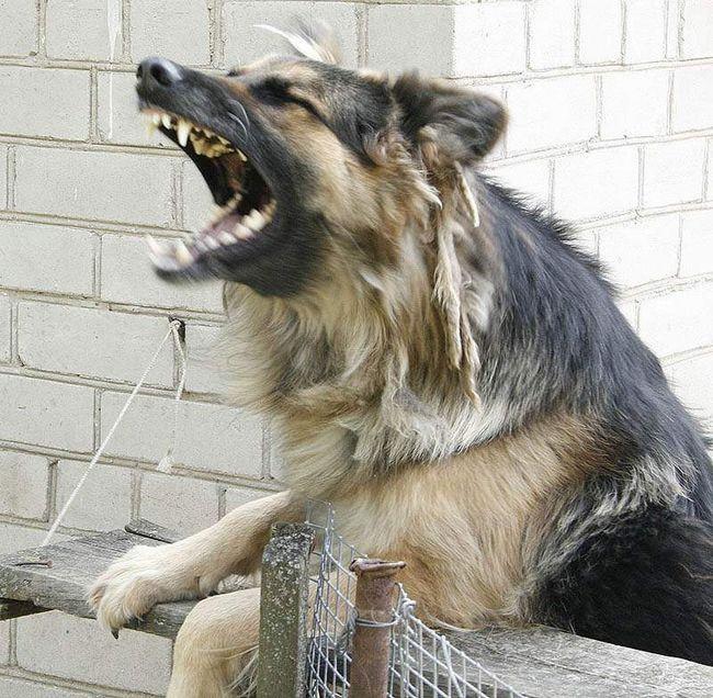 Собака покусала жінку і дитину.