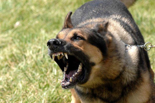 Сказ - небезпечна для собак хвороба.