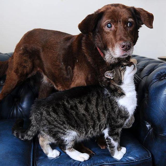 Кот взяв на себе турботу про сліпого пса, як тільки вперше його побачив (фото: walesonline.co.uk)