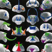 Рогу, які відіграють роль вторинних статевих ознак у самок жуків, поки ще залишаються маловивченими, відзначають австралійські вчені (ілюстрація Nicola L. Watson).
