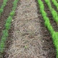 Біологічне землеробство