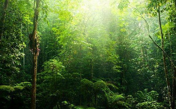 Дощовий ліс є реакція флори на високу температуру і рясне зволоження. (Фото iStockphoto / Sze Rei Wong.)