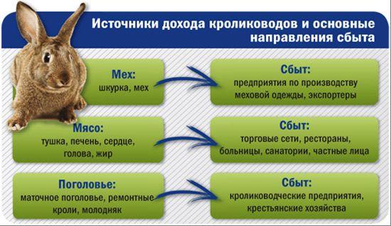 Бізнес-план по розведенню кроликів за 6 кроків