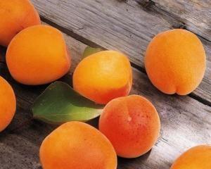 Хвороби абрикос, методи боротьби і профілакткі