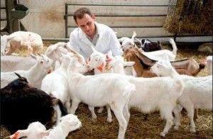 Хвороби кіз симптоми і лікування