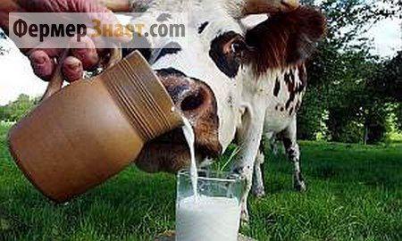 Лейкоз великої рогатої худоби: особливості захворювання та методи вирішення проблеми