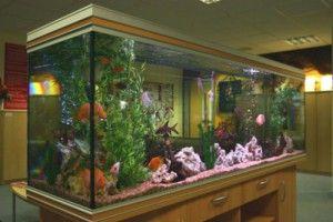 Великі акваріуми