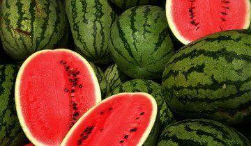 Вирощування кавунів, livelovefruit.com
