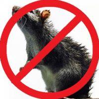 Боротьба з мишами, вибираємо прилад правильно