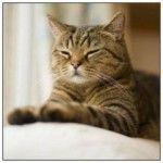 Боремося з паразитами - як позбавиться від бліх у кішки