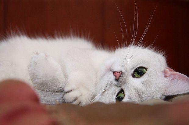 Ще раз про ігнорування туалету кішками