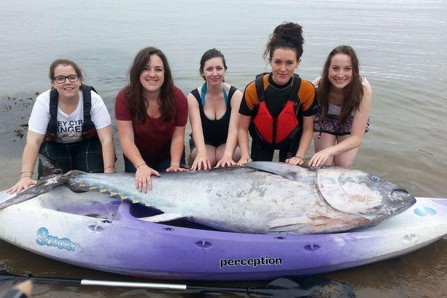 Британські туристки знайшли блакитного тунця вартістю 1,7 млн доларів